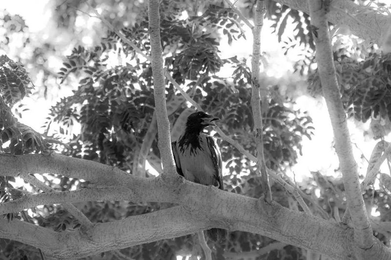 EyeEm Birds Crow Urban Birds Love Brids
