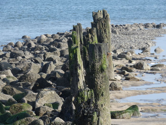 Water Beach Sea Rock Wood - Material Scenics - Nature Nature No People Beauty In Nature Rock - Object