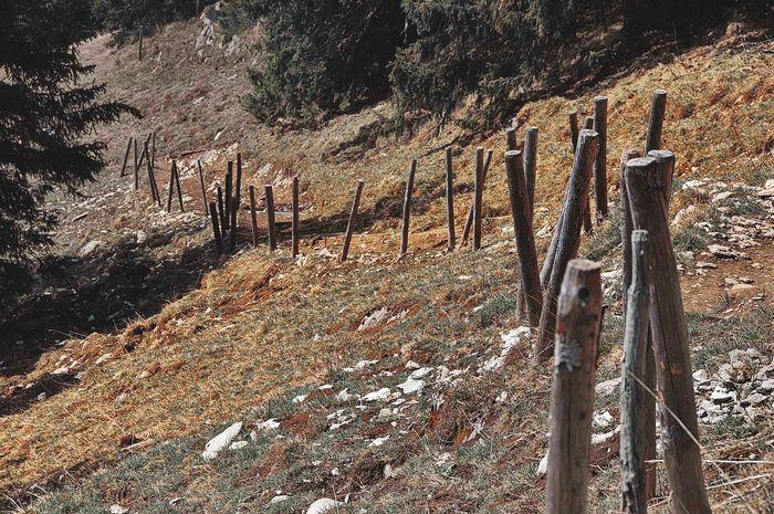 No People Field Hiking Allgäuer Landschaft Allgäuer Alpen Track Route Path Trail Poles Sticks Arrangement Outdoors No People,