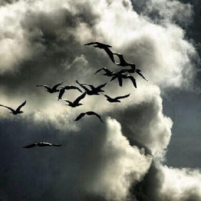 Instaflight Birds