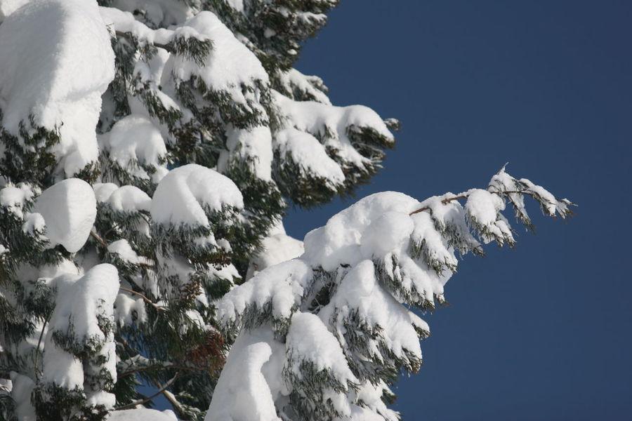 2006年の長野県の大雪 Snow Winter Snowing Wintertime Wintertime In The Country Japan Japan Photography Winter Photography Winter Photos Snow Photography