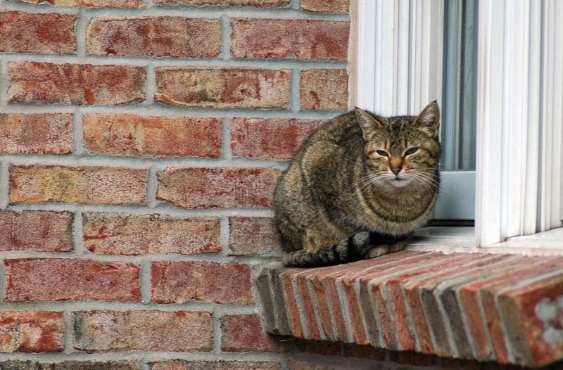 Portrait of cat sitting against brick wall