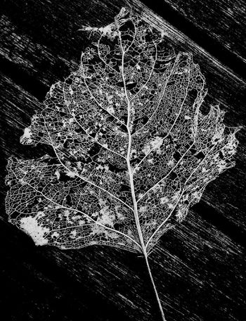 I loved the detail on this little naked leaf. Like the most intricate lace work Natures Architecture true TreePorn Blackandwhite EyeEm Nature Lover
