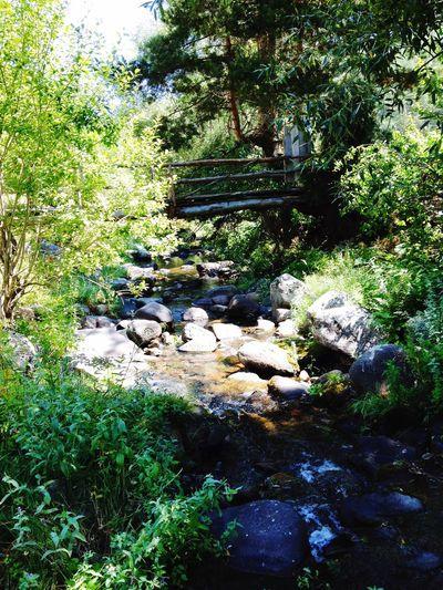 Green Nature Bridge Water LoveNature Natureforpeace
