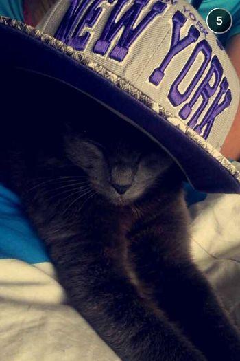Lovely Cute Cat Beautiful <3