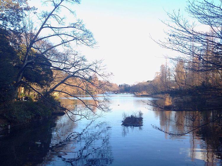 Japan Tokyo,Japan Japan Photography Inokashira Park Kichijoji Mitaka Warking Around Beauty In Nature Tranquil Scene Sky Lake Water