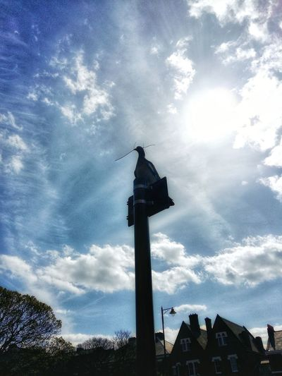 Cloud - Sky Sky Low Angle View No People Day Outdoors Architecture Sculpture Statue Cityscape Clock City Pigeon Nesting Birds