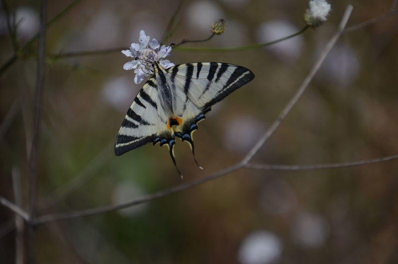 Animal Themes Animal Wildlife Animals In The Wild Beauty In Nature Butterfly - Insect Close-up Day Focus On Foreground Fragility Full Length Insect Nature No People One Animal Outdoors Perching