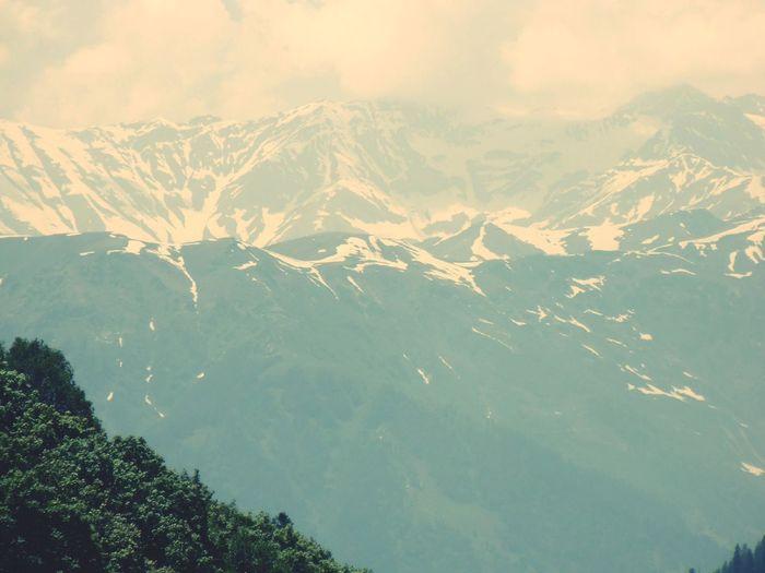Himalayas Tree