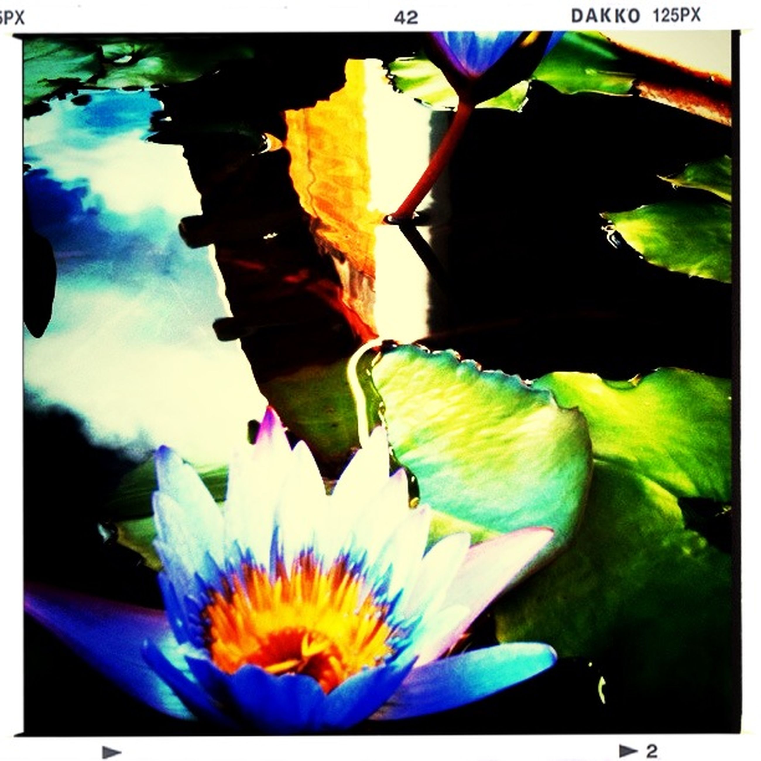 transfer print, auto post production filter, flower, petal, animals in the wild, animal themes, wildlife, one animal, fragility, leaf, close-up, nature, flower head, beauty in nature, yellow, blue, water lily, floating on water, plant, freshness