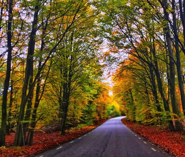 Tree Plant The Way Forward Direction Road Transportation Beauty In Nature Autumn Empty Road