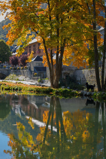 Autumn Collection Autumn Colors Nature Photography Trees Beauty In Nature Black Dog Building Exterior Leaf No People Reflections In The Water Riverbank Scenics Tranquil Scene Outdoors