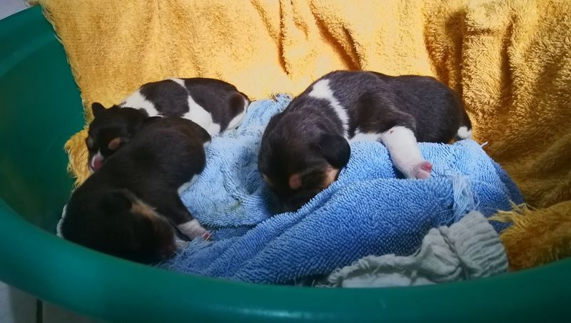 orphaned beagles Dogs Dogs Of EyeEm Pet Puppies EyeEm Selects Pets Dog Close-up Beagle Pet Bed Puppy Sleeping Napping