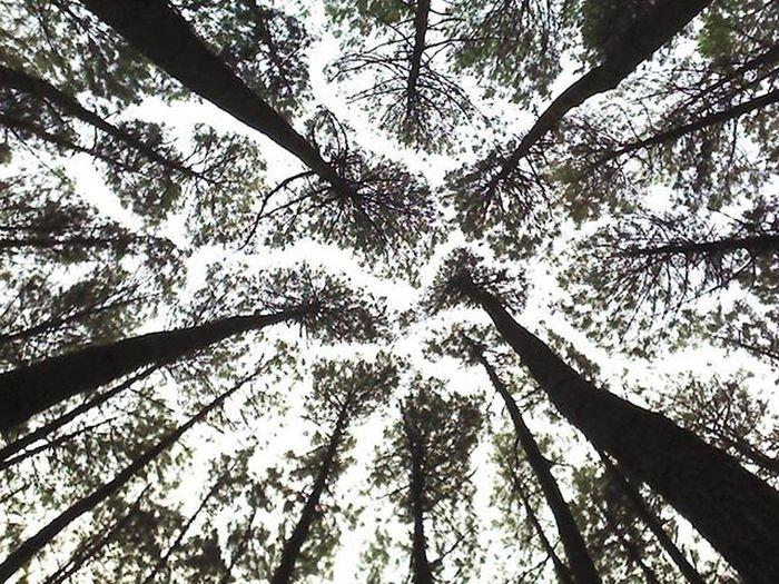 Pinus pinus pinus. Enaknya kalo lagi di hutan itu adem suhunya, bisa nikmati udara segar. Tripjogja Tripalone TakeABreath Calm Forrets Green