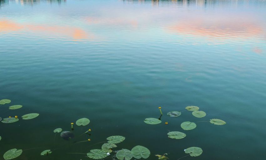 Sunset Dusk The Great Outdoors Taking Photos Feeling Creative EyeEm Best Shots EyeEm Nature Lover Nature Freshness Relaxing View Tranquility Water Reflections Blooming Flower Collection Water Floating On Water Lake Water Lily Leaf High Angle View Reflection Sky Calm Tranquil Scene Lakeside