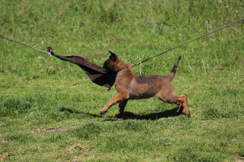 Defense Dog Trainer Dog Training Dogs Learning Outdoors