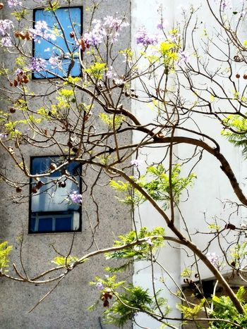 Uraban Building Exterior Beauty In Nature Trees EyeEm Best Shots Hello World Peaceful