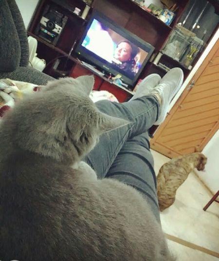 MyFamily💗 Mycat♥ My Dog <3