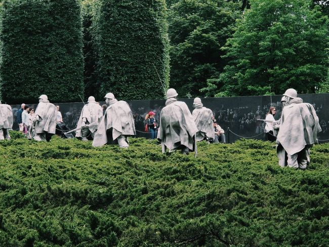 Army Soldier Green Color Korean Memorial Military Military Parade Nature Outdoors