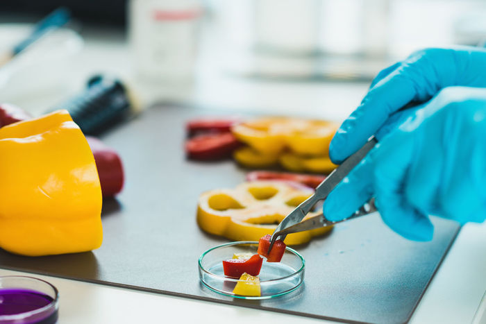Food Safety, Vegetables Checking Cutting Food Quality Laboratory Analysis Red Additives Analysis Analyzing Bell Peppers Biotechnology Food Hazard Health Inspecting Inspector Laboratory Organic Peppers Pesticides Petri Dish Quality Control Technician Test Testing Yellow