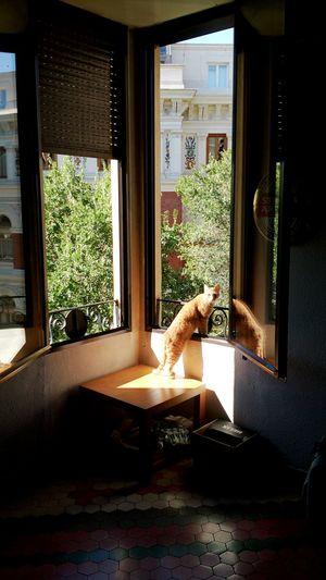 Check This Out Taking Photos Relaxing Cat Gato Cats 🐱 Gato😽 Gatos Gatos En La Ventana