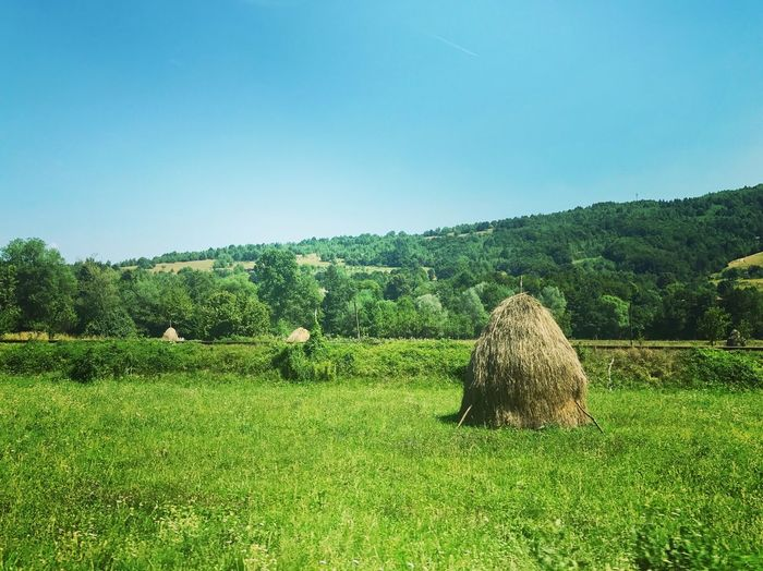 Agriculture Field Bale  Hay Nature Clear Sky Outdoors Rural Scene Grass Day Landscape Haystack Beauty In Nature Green Color Growth Scenics Hay Bale No People Tree Blue