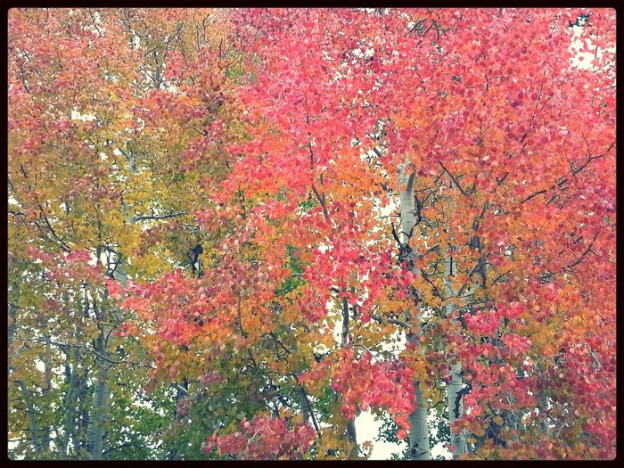 Autumn Leaves TreePorn Dani Filter
