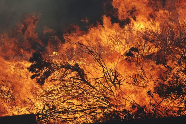 Wildland Fire. Nature Burning Beauty In Nature Close-up Wildlandfire Wildlandfirefighter Firefighter Fire Forest Fire EyeEmNewHere EyeEm Best Shots EyeEm Nature Lover Eye4photography  EyeEm Gallery