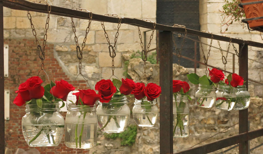 City City Life Cityscapes Day Flower Genoa Genoa, Italy, Europe, Liguria Genova Hanging Jars  Nature No People Old Stones Outdoors Red Roses Roses Are Red Roses🌹 Stones Vessel Vessels