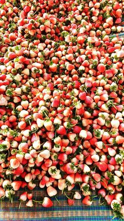 Abundance Day Freshness Red No People Full Frame Food And Drink Food Fruit Outdoors Backgrounds Nature Healthy Eating Large Group Of Objects Growth Beauty In Nature Close-up