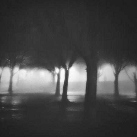 Foggy evening. Foggy Night Silhouette Winter Trees Monochrome