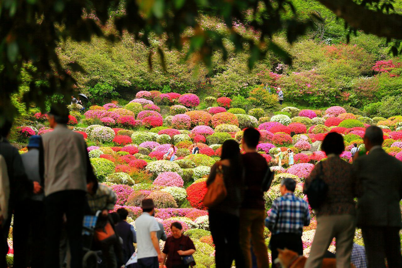 Tourists In Formal Garden