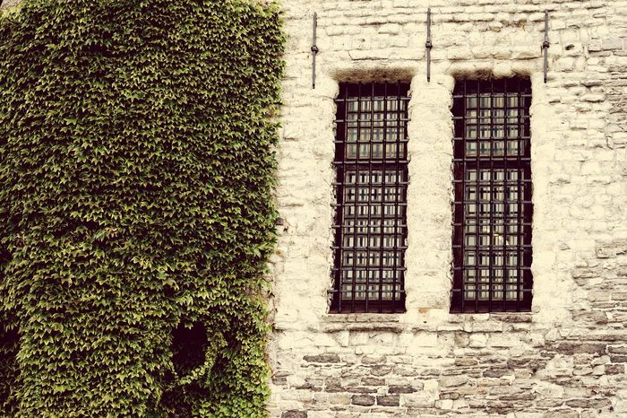 Window Built Structure Architecture Building Exterior Wall - Building Feature Plant Growth Outdoors Green Color Creeper Day Overgrown No People Façade Antwerp, Belgium Old But Awesome Famous Building Old Building  Architecture Tourism Old Nature In The City Leaves Full Frame