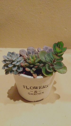 SucculentsLover Succulent Love Succulentflower Text Handwriting  Indoors  No People Paper Greeting Card  Beige Background Close-up Day