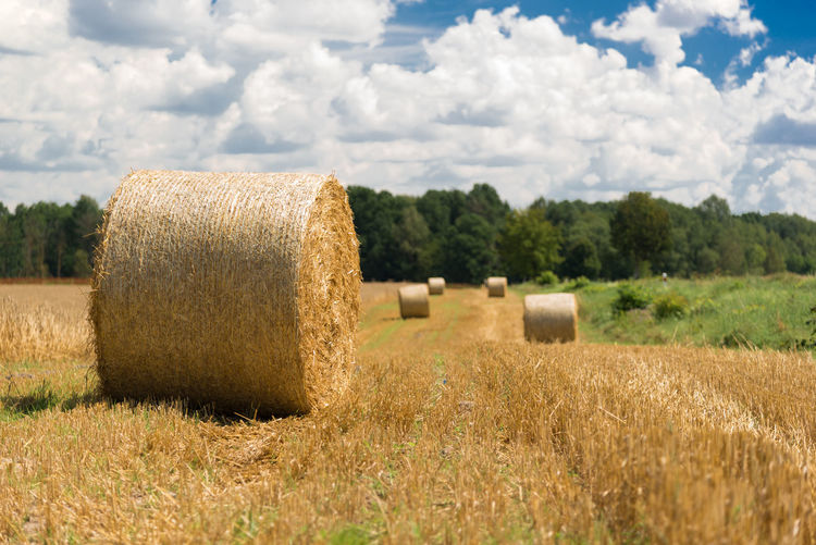 Hay roll on a meadow on a hot summery day with puffy clouds on a deep blue sky Agriculture Bale  Beauty In Nature Cloud - Sky Day Field Harvesting Hay Hay Bale Landscape Nature No People Outdoors Rural Scene Sky Tranquil Scene Tranquility Tree