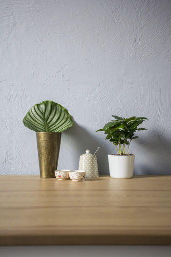 Decoration Growth Home Interior Houseplant Indoors  Plant Potted Plant Still Life Table Vase Wall - Building Feature Wood - Material