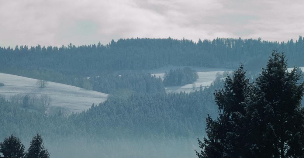 Cold Doubs Fog Hivern Landscape Montagnes Mountain Mountain Range Nature Nature Outdoors Sapinsapin Snow Valdemorteau Winter