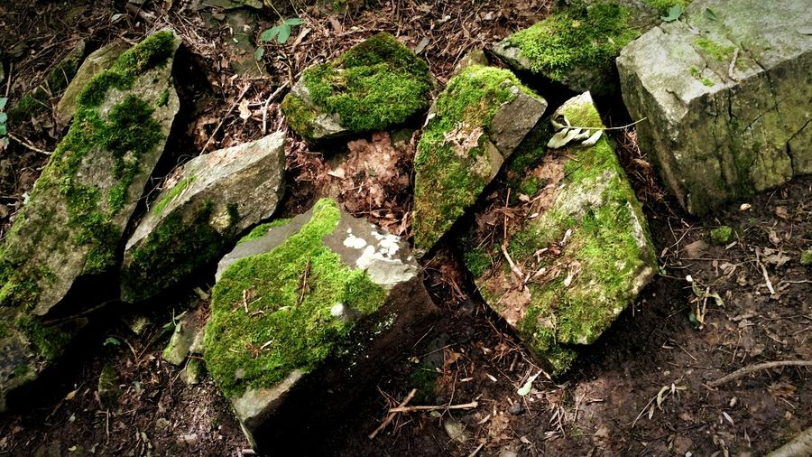 Stone Stones Stone Material Moss Green Moss Green Nature Little Nature