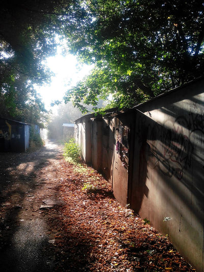 Beauty In Nature Day Garage Growth Illuminated Ivy Leaf Light Lights And Shadows Morning Nature No People Outdoors Path Road Shadow Shadows & Lights Sunlight Tree