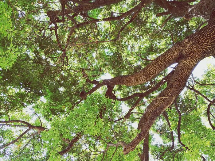 Tree Low Angle View Nature Growth Green Color Day Branch Beauty In Nature Forest No People Outdoors Full Frame Plant Backgrounds Animal Themes Sky Close-up Japan Photography Outdoor Outdoor Photography Foest🌳 Foest Arts Culture And Entertainment Parks Park
