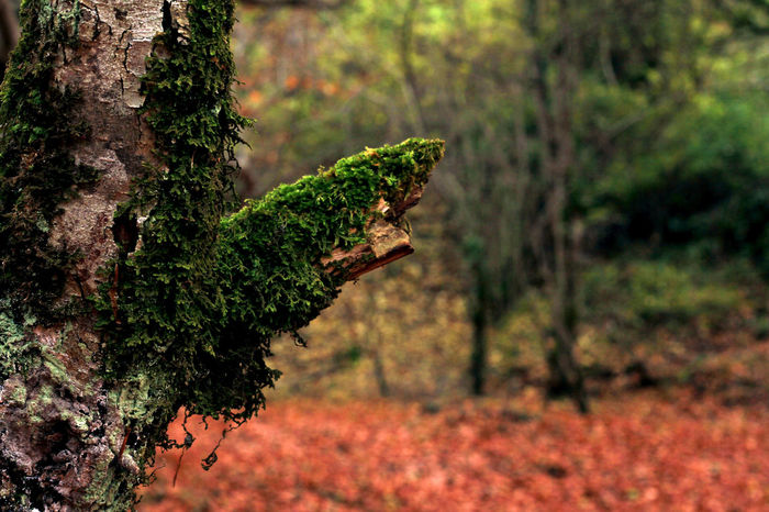 Moss Autumn Nature Nature Photography Tree Winter Wood Beauty In Nature Close-up Day Details Focus On Foreground Forest Forest Photography Forestwalk Growth Moss Nature Nature_collection No People Outdoors Plant Texture Tree Tree Trunk Wood - Material EyeEm Ready   EyeEmNewHere