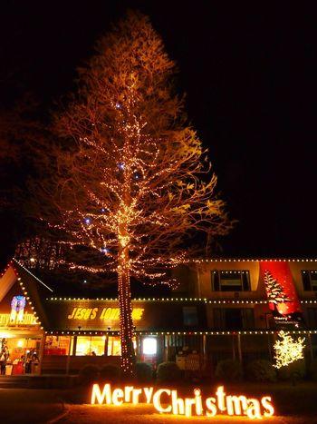 Merry Christmas! Christmas Christmas Tree Christmas Lights