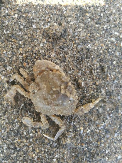 Beach Sand High Angle View Nature Crab On The Beach Sea Life Close-up