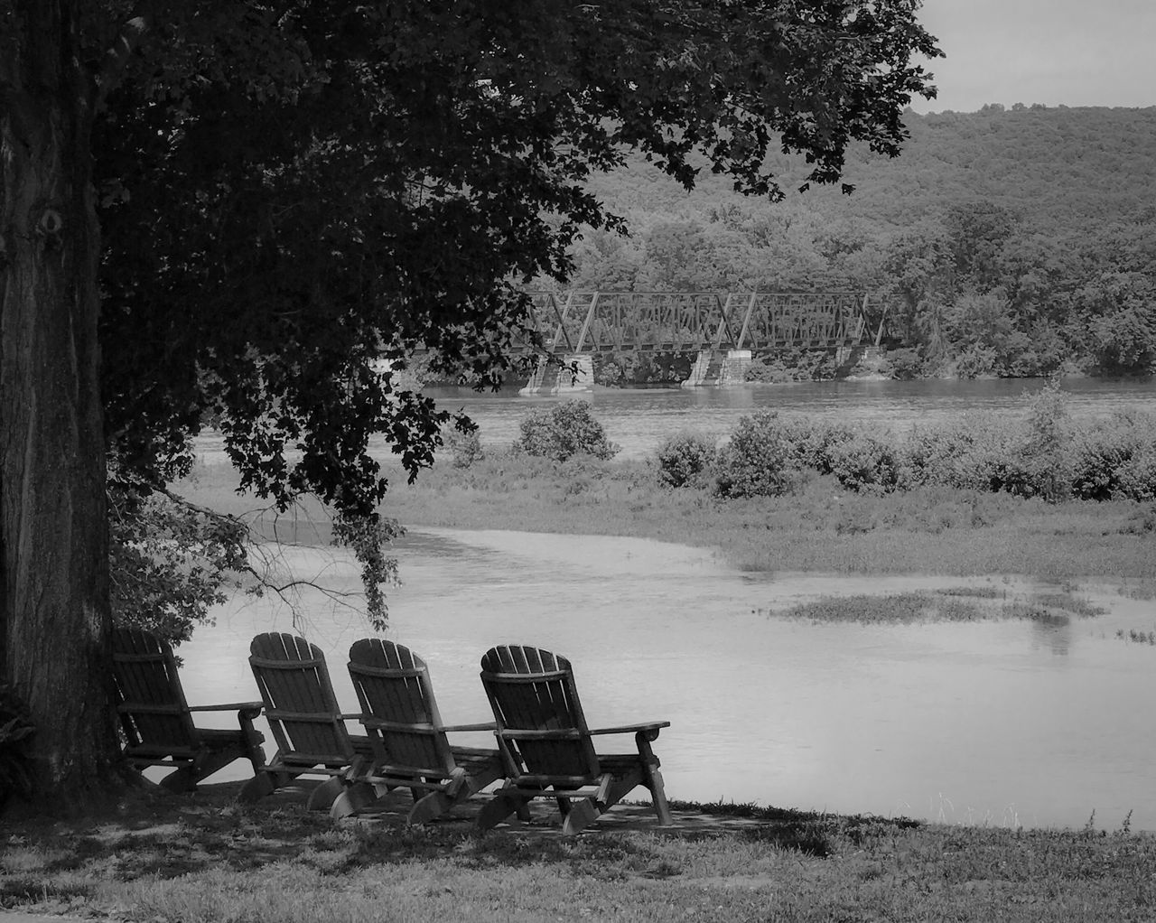 tree, plant, seat, chair, nature, empty, tranquil scene, tranquility, day, no people, absence, beauty in nature, growth, water, scenics - nature, outdoors, relaxation, land, lake, park bench