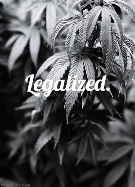 Maconhize a legaconha n MaryJane Marijuana Erva MOTA Verde Plantadivina Brisa Cannabis Thc Bamba Beck