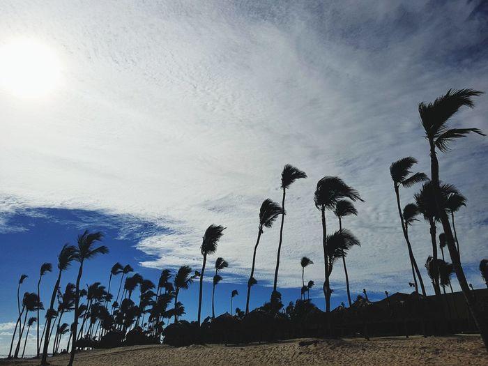 Tree Palm Tree Sky Cloud - Sky