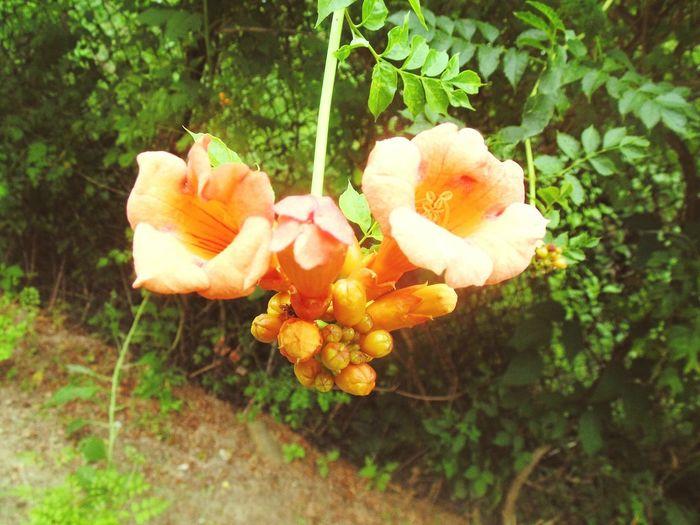 Zest Flowers