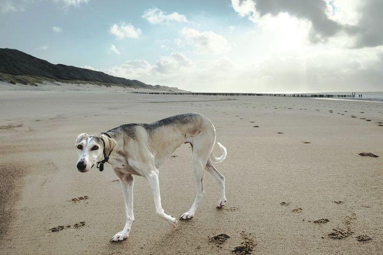 Lonely Dog Enjoying Life Seascape Beach Photography Meer Life Is A Beach Holland Clouds And Sky Classic Chrome x-e2 Fujifilm X-E2