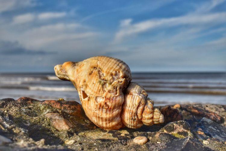 sea life Malephotographerofthemonth Nature Photography Wildlife & Nature Nature Wildlife Photography Norfolk Norfolk Coast Sea Shells Close-up Beach Photography Water Sea Beach Sea Life Sky Close-up Horizon Over Water Animal Themes Shore Coast Rock Formation