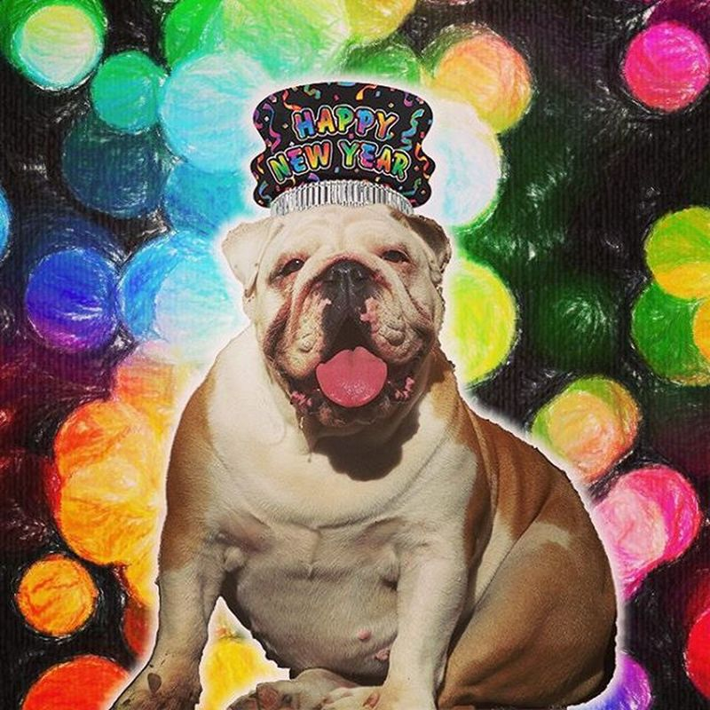 Happy new year! I wanted to write a big inspirational text here about 2016, but I can't think about anything... So in 2016, just be true to yourself and the rest will follow… EnglishBulldog Bulldogs Bully Bullies Bulldogslovers Pets Puppy Puppies Petslovers New Year 2016 Likeforlike Like4like Love Friends Awesome Bullismoitaliano Cucciola  Instadog Instamood Cute Smile Bulldogbrasil Bulldogitalia